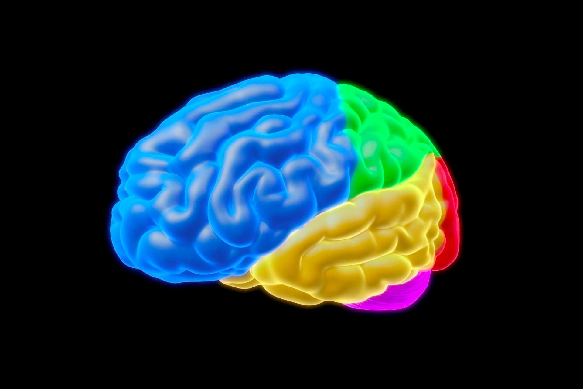 imagen de un cerebro con colores azul verde amarillo rojo y morado prevencion del alzheimer