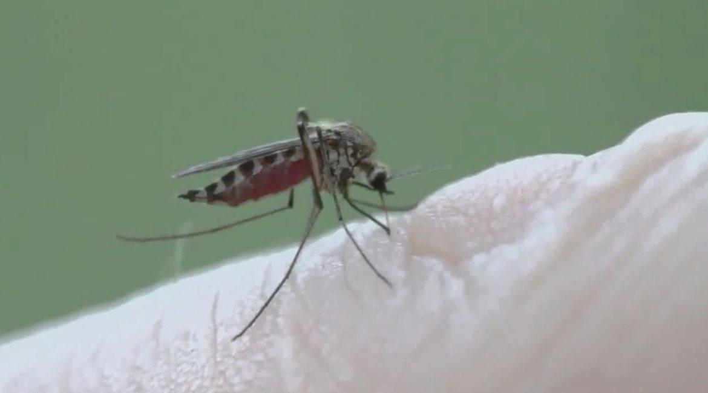 fotografia de mosco picando la piel de una persona sabias que hay alimentos que lo evitan