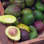 varios aguacates de cascara verde y uno partido a la mitad usos de la semilla de aguacate