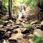 fotografia con rocas arboles y mas plantas ademas de un pequeno rio de amatlan morelos