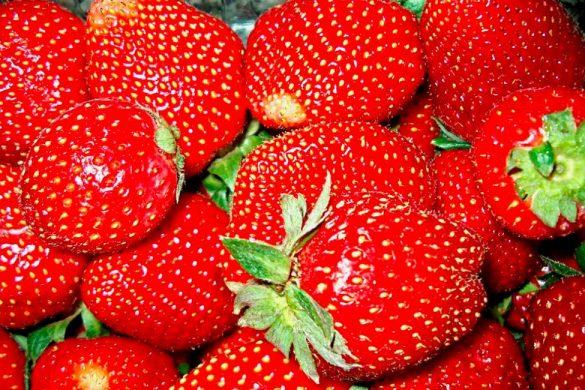 conjunto de fresas rojas con rabo verde mira los efectos positivos de la fresa en el estomago