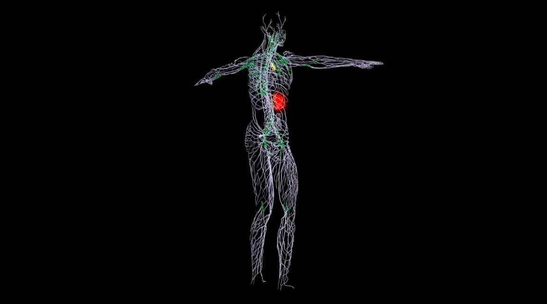 rayos x del cuerpo humano con tejidos en blanco y verde mancha roja en el abdomen