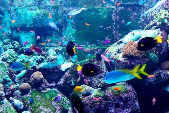 diferentes especies de peces de colores en un arrecife peces afectivos