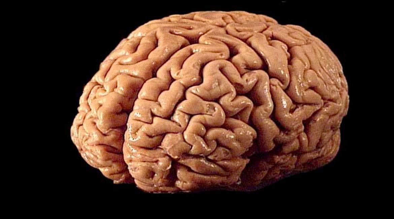 fotografia de fondo negro y la imagen de un cerebro descubre cinco datos de este organo