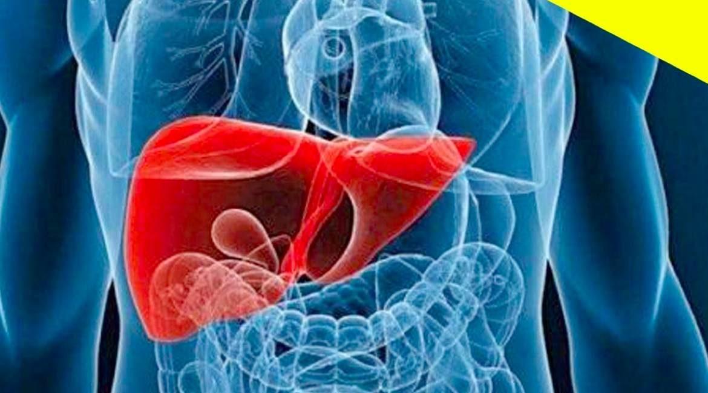 radiografia en tonos azules del interior de cuerpo humano con el higado en color rojo