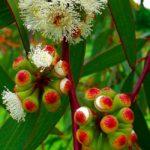 racimo de plantas en color blanco rojo y verde antibioticos naturales que no conocías