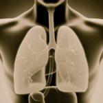 imagen en tercera dimension de interior del cuerpo humano destacando los pulmones
