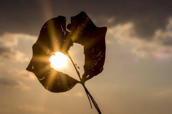 hoja de arbol con forma de corazon y sol al fondo conoce la diferencia entre amor y apego