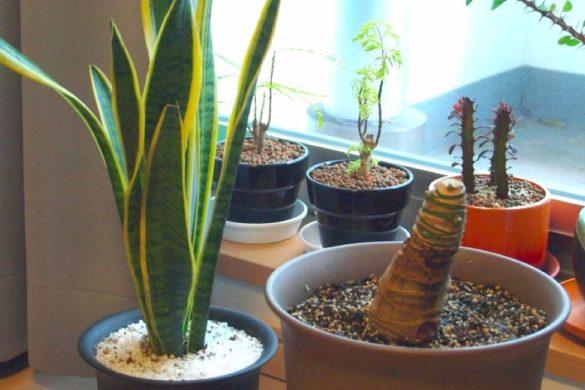 diferentes plantas que crean energia positiva en sus respectivas macetas frente una ventana