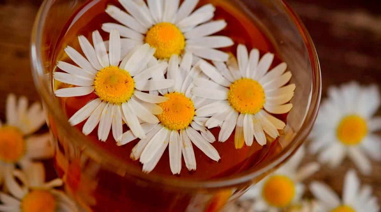 flor de manzanilla en un vaso de vidrio una de las bebidas para limpiar tu higado