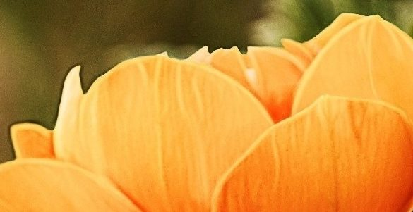 fotografia de petalos de flor color amarilla descubre como mantener frescas las flores