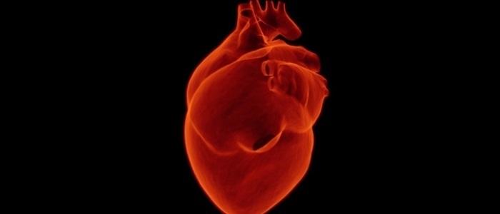 imagen con un corazon humano color rojo hablando de sintomas de paro cardiaco en mujeres