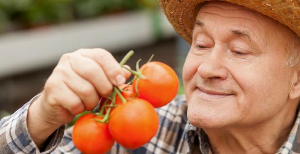 adulto mayor con sombrero oliendo tres tomates conoce sobre los aromas que sanan