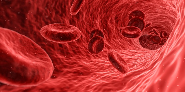 imagen en tercera dimension de la forma en que corre la sangre por las venas arteriosclerosis